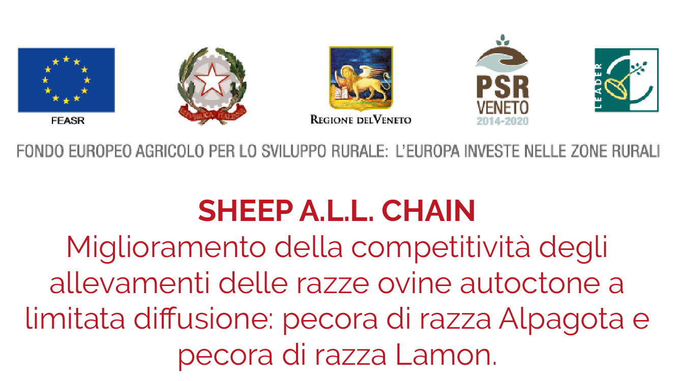 sheep all chain pecora lamon